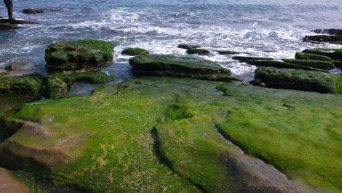 台灣海岸景觀具多樣性應快速通過「海岸管理法」,俾落實分區保護與利用之精神 。郭瓊瑩攝