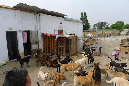 中華民國保護動物協會的「寵物食物銀行」,提供資源不足的立案民間收容所申請飼料補助。 取自社團法人中華民國保護動物協會