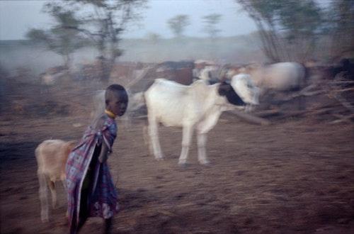 莫爾西牧童躲著相機。縱使觀光日漸入侵,鏡頭對許多人而言仍屬陌生