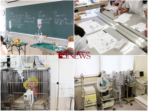 一般短大的國際動物專門學校,就開設有2/3年制的動物看護師課程,學生需要學習糞便、尿液、血液檢查,測量體溫、心跳等等。圖為課堂上學生正在學習操作點滴、認識狗狗身體器官等等。 何宜/攝|台灣動物新聞網