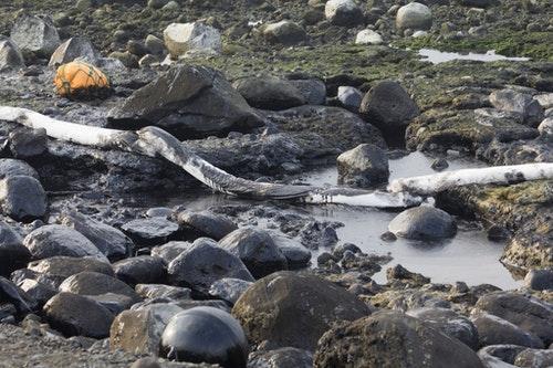 潮間帶被厚厚一層油污覆蓋。攝影:周昭蕊