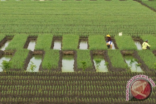20160420antarafoto-kanalisasi-lahan-tanaman-bawang-merah-190416-ol-2