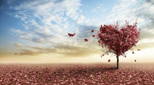 love-autumn-tree_759_thinkstockphotos-17
