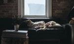 如何一邊睡覺一邊用「清潔劑」洗去大腦的疲勞物質?