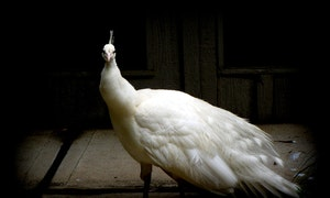 nature-outdoor-wilderness-bird-wing-blac