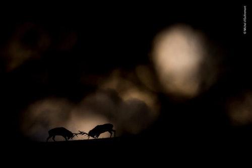 ©_Michel_dOultremont_-_Wildlife_Photogra