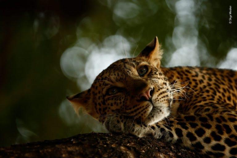 ©_Skye_Meaker_-_Wildlife_Photographer_of