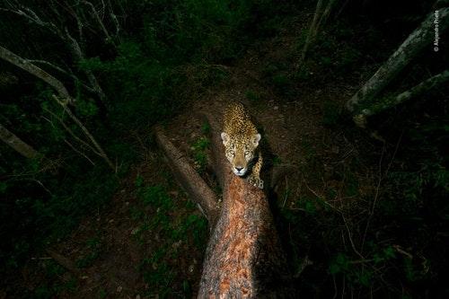 ©_Alejandro_Prieto_-_Wildlife_Photograph