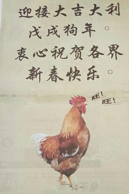 Barking_Chicken