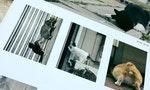 紀錄下街貓不為人知的丟臉樣貌:「必死すぎるネコ太拼命的毛孩」寫真展現正開催中