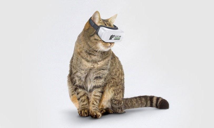 為了阻止野鳥被傷害,澳洲人發明了「貓咪專用」的VR眼鏡