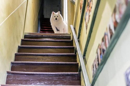 樓梯好陡-47