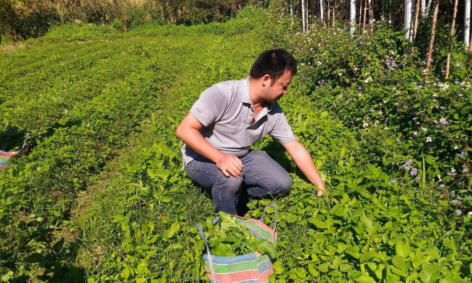 【青春還鄉】從鄉土滋養的初心:許又仁持續深耕的永續農業藍圖