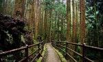 漫步在充滿故事的景色之中:台灣登山健行古道8選