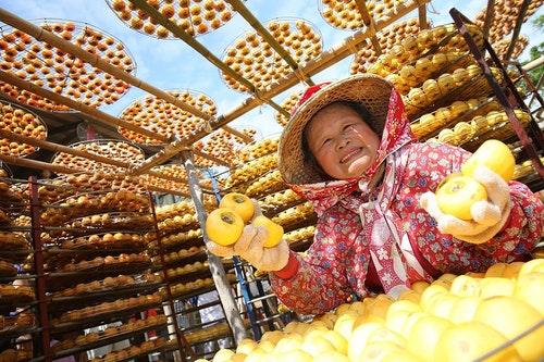 新埔柿餅當政績 新竹縣農產品加工給力