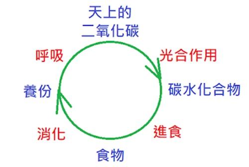 二氧化碳循環