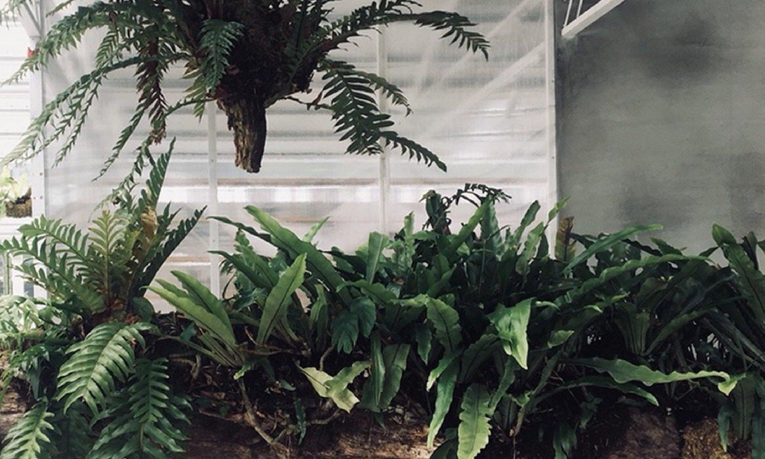 綠意環繞的植物生活