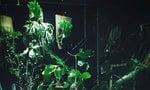 在房間角落打造療癒的綠色叢林:給新手的鹿角蕨栽培指南