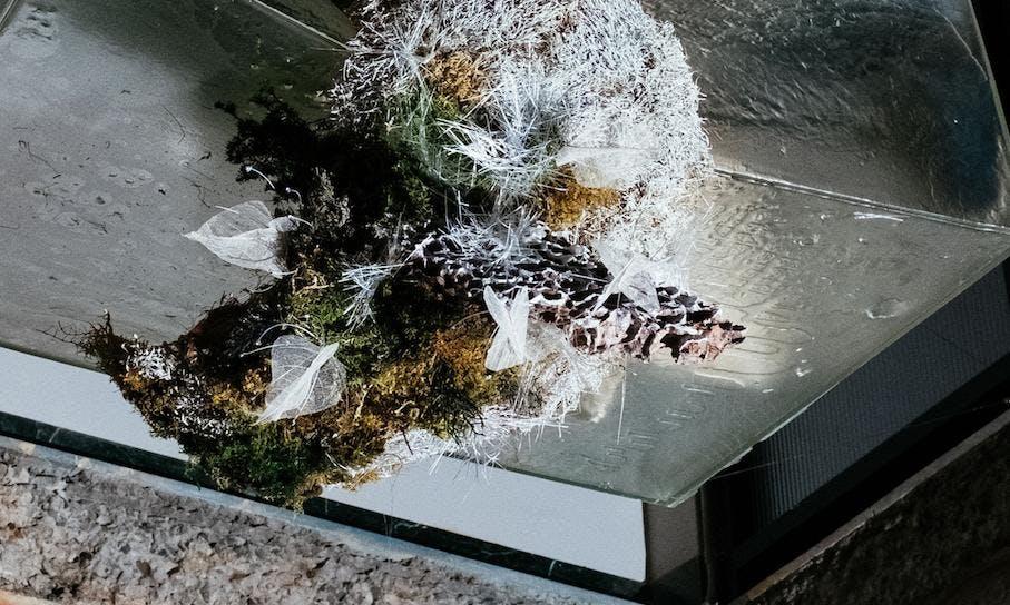 用植物的個性去說話,是他對植物最純粹的使用說明——專訪「質物霽畫」