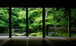摸透「樹的性格」才能打造出和諧景色:淺談日式庭園之美學