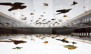 森山蛾特展_展場攝影紀錄-05【照片提供|森3_SUN_SUN_MUSEUM、攝