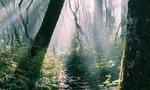 夏日裡的寧靜香氣|五款爬不了山也能回歸地球母親的森林系香氛