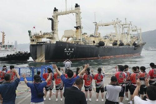 日本恢復商業捕鯨