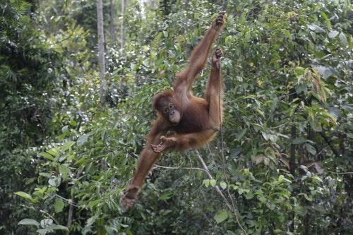 婆羅洲雨林照片AP_110109110244