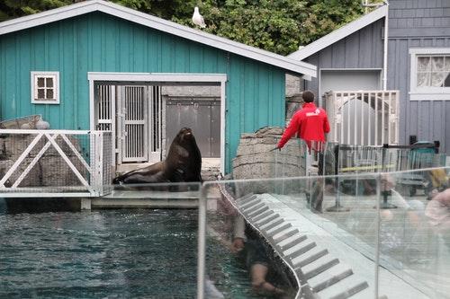02海獅訓練秀