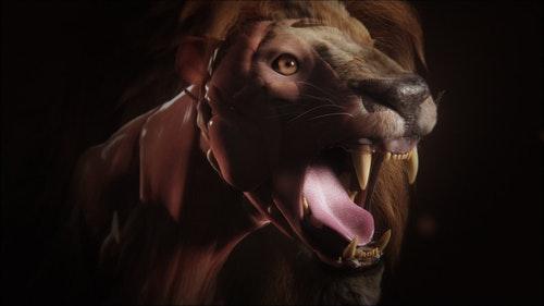 Lion_5