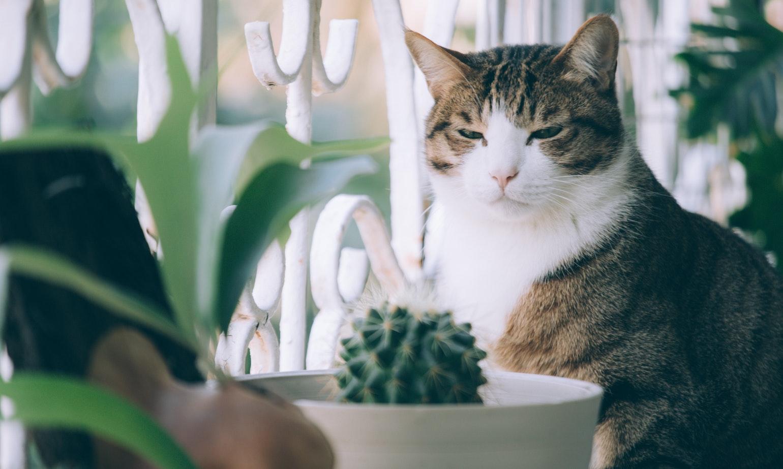 要不要來我家看貓