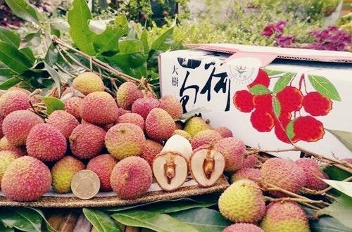 圖一、團購平台「飯團媽」率團購主親赴玉荷包產地試吃採購,直送當季新鮮水果