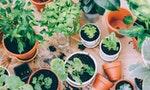 芽菜是種在床底下才會長的好:城市小農的「自家陽台種菜」小訣竅