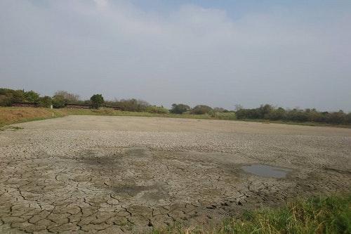 台南水雉生態教育園區缺水